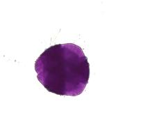 Salvia coccinea – Texas Sage