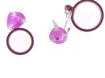 Spigelia gentianoides – Purpleflower Pinkroot